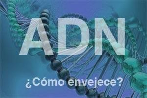 El ADN y la edad