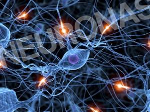 Células cerebrales de repuesto