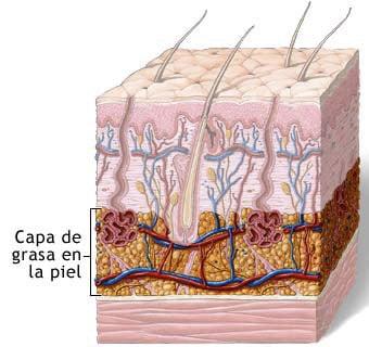 Piel de la celulitis