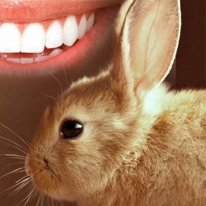 conejo cirugia estetica