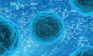 Extraer grasa de las células madre
