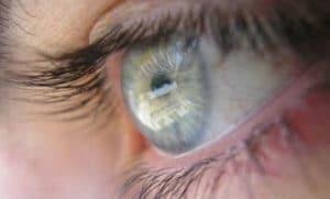 retinas celulas madre